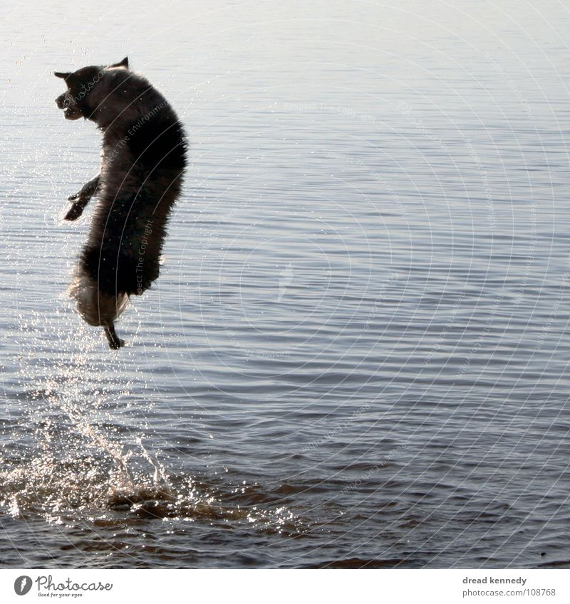 Seehund Hund Ferien & Urlaub & Reisen Sommer Freude Tier Leben Spielen Bewegung Freiheit Gesundheit Schwimmen & Baden frisch Lebensfreude Sonnenbad Haustier Tatkraft