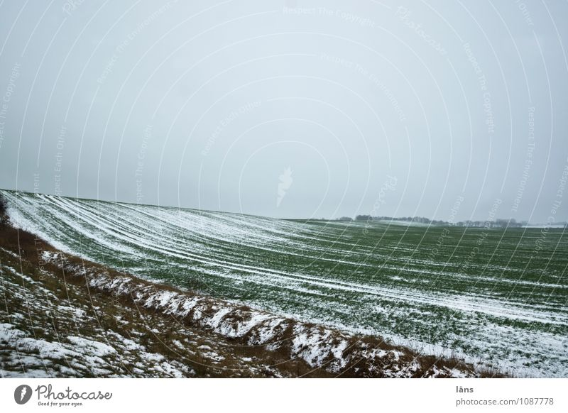 Winterlandschaft Natur Landschaft kalt Umwelt Schneefall Eis Feld Erde Beginn Frost Landwirtschaft Schneelandschaft Forstwirtschaft