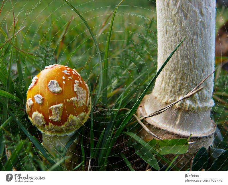 -L-E-C-K-E-R- Lebensmittel Ernährung Umwelt Natur Pflanze Gras dick dünn groß klein rund gelb grün orange weiß Geborgenheit Pilz Schirm Halm Fliegenpilz