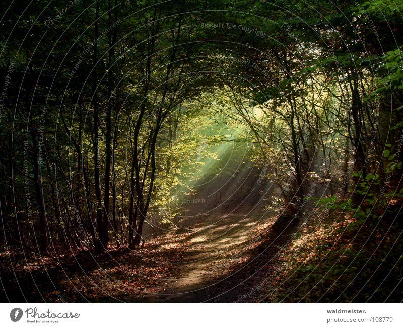 Märchenwald Baum Sonne grün Wald Nebel Romantik Urwald feucht mystisch Zauberei u. Magie Lichtstrahl
