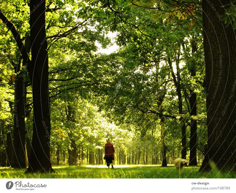 morgens, halb zehn in deutschland II Mensch Baum Sommer Freude ruhig Haus Wolken Einsamkeit Wald dunkel Erholung Gras Traurigkeit Park Denken Nebel