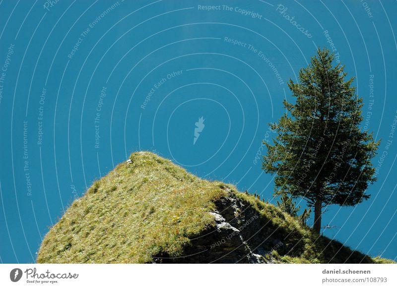 O Tannenbaum (Weihnachtskarte ??) Natur Baum grün blau Sommer Einsamkeit Herbst Berge u. Gebirge See wandern Schweiz Hügel zyan einzeln
