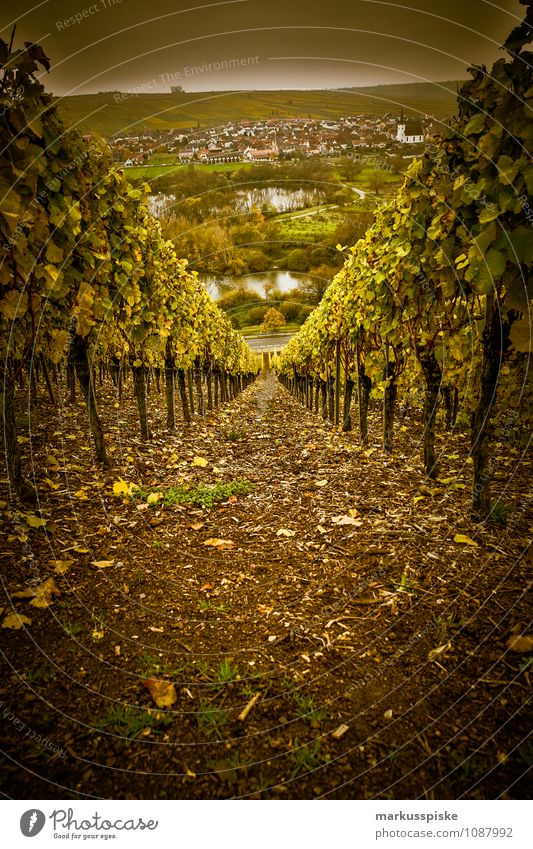 main- weinfranken Natur Berge u. Gebirge Umwelt Tourismus Wachstum Perspektive genießen Wein Flasche Tal Main Feinschmecker Franken Winzer Flußbett Winzerfest