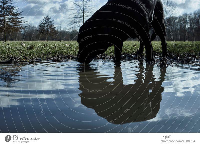 besäufnis Hund Himmel Natur blau Pflanze grün weiß Wasser Landschaft Tier schwarz Umwelt Wiese Frühling natürlich braun