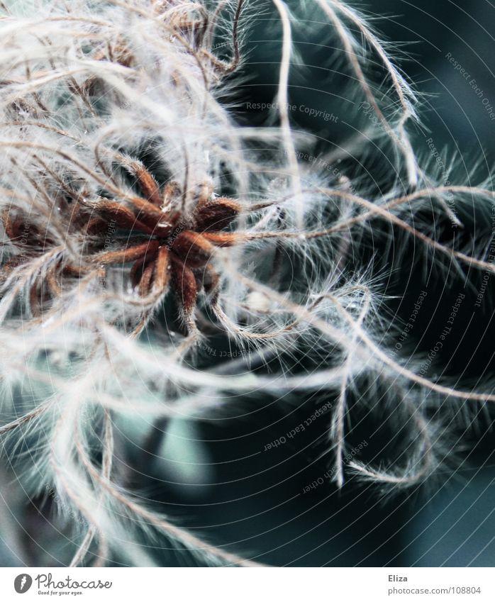 Sternenfäden Natur Weihnachten & Advent schön weiß Pflanze Winter dunkel kalt Schnee Spielen Stern (Symbol) nah weich Feder