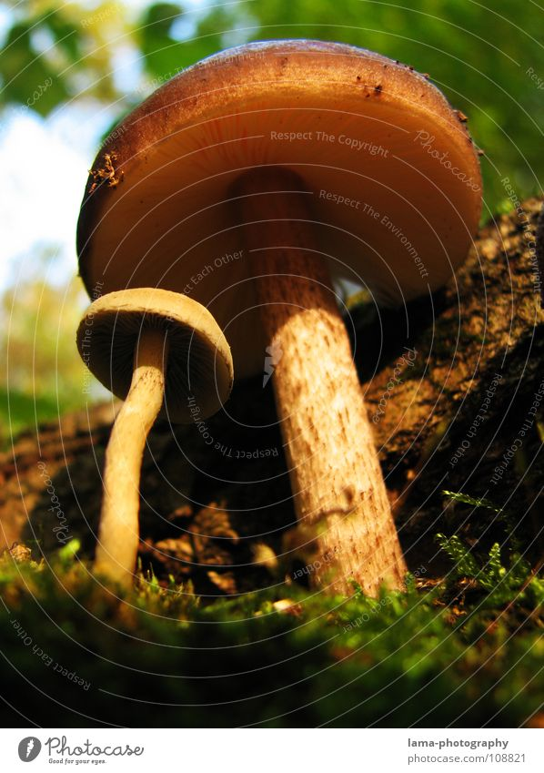 Mutter-Kind-Beziehung Wald Partnerschaft Schutz Beschützer Kontrolle Herbst Fliegenpilz Mütze Baseballmütze Blatt Unterholz Geäst Waldboden Gras Märchen