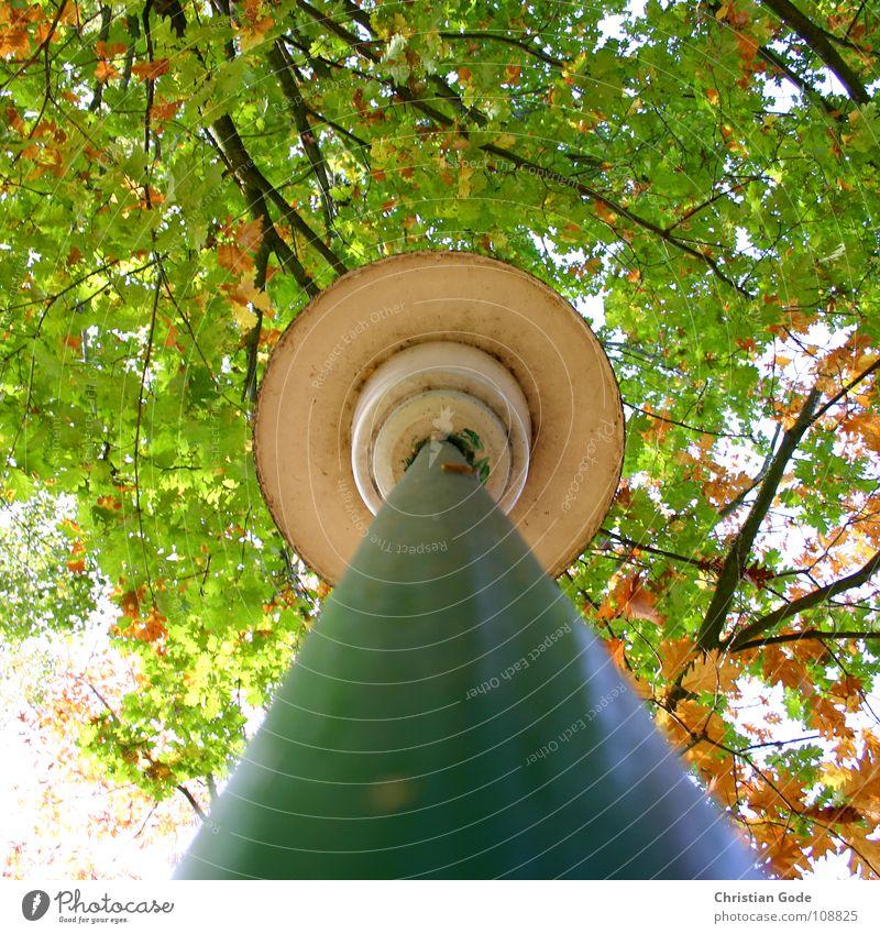 Hochhinaus Baum grün Straße Lampe Herbst braun Kreis Ast Dinge Parkplatz Straßenbeleuchtung Pfosten Dreieck