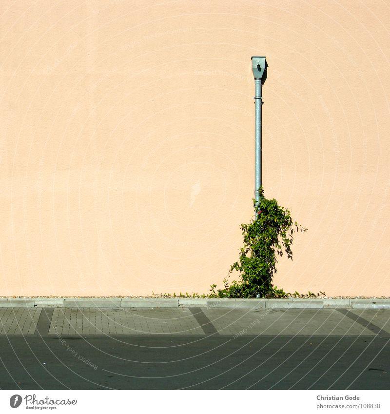 Parkplatzsituation 2 grün Pflanze Wand grau orange Metall Architektur rosa geschlossen leer Wachstum Dinge Verkehrswege Supermarkt Sonntag
