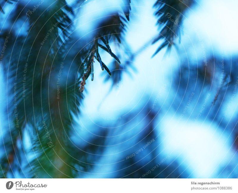 Zauberwald ruhig Umwelt Natur Baum Wald atmen entdecken einfach kalt stachelig trist blau grün Zufriedenheit Coolness Einsamkeit Erholung Farbfoto Außenaufnahme