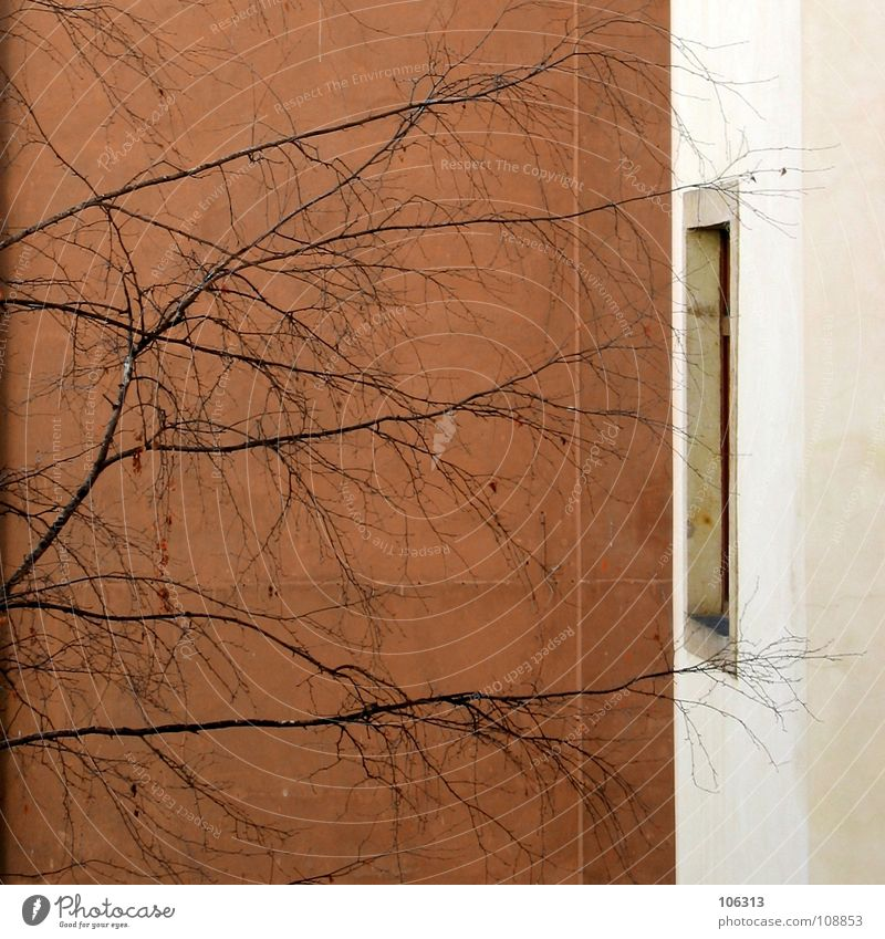 THE WAY OUT Haus Wand Fenster träumen Mauer Arme gefährlich bedrohlich Ast berühren Lebewesen Eingang Gedanke falsch Zweig anonym