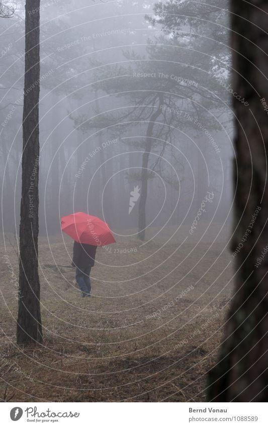 Kleines Kind feminin Mädchen Kindheit 1 Mensch 8-13 Jahre Natur Wetter Nebel Baum Wald Regenschirm gehen träumen blau braun grün rot verloren Suche Schirm