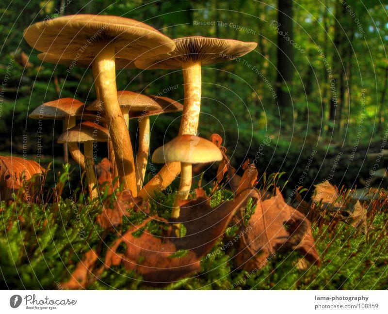 Happy Family Blatt Wald Ernährung Herbst Gras träumen Beleuchtung Stimmung modern Bodenbelag Schutz fantastisch Regenschirm Gemüse genießen Mütze