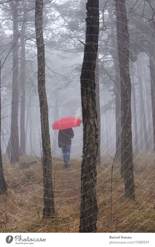 Märchenstunde Kind Mensch feminin Mädchen Kindheit 1 8-13 Jahre Natur Wetter Nebel Baum Wald Regenschirm gehen träumen blau braun grau grün rot Einsamkeit