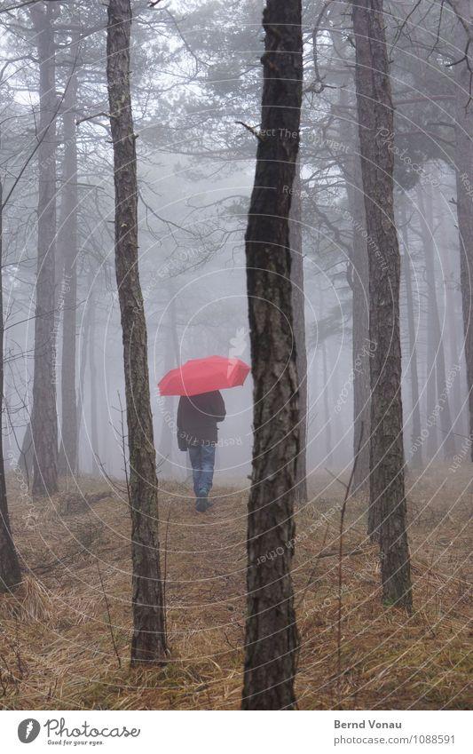 Märchenstunde Mensch Kind Natur blau grün Baum Einsamkeit rot Mädchen Wald feminin grau braun gehen träumen Wetter