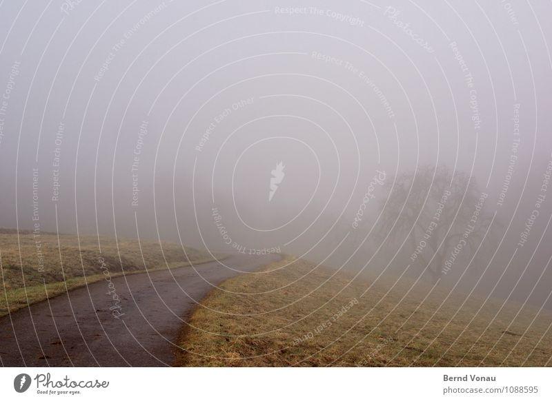 unklar Berge u. Gebirge Natur Wetter Nebel Baum Gras Hügel Verkehr Straße Wege & Pfade grün Stimmung Zukunft trüb Dunst Kurve ungewiss Nebelwand schlecht