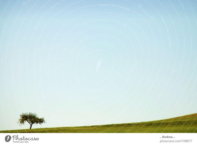 Einzelkämpfer Himmel blau grün Baum Einsamkeit Landschaft Wiese Idylle Österreich himmelblau Informationstechnologie azurblau Betriebssystem Windows XP