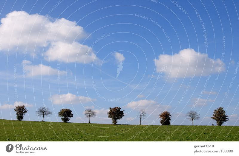 1-0-1-0-1-0-1-0-1 digitale Bäume Himmel weiß Baum grün blau ruhig Ferne Herbst Landschaft wandern Horizont Spaziergang Idylle Reihe Kette Allee