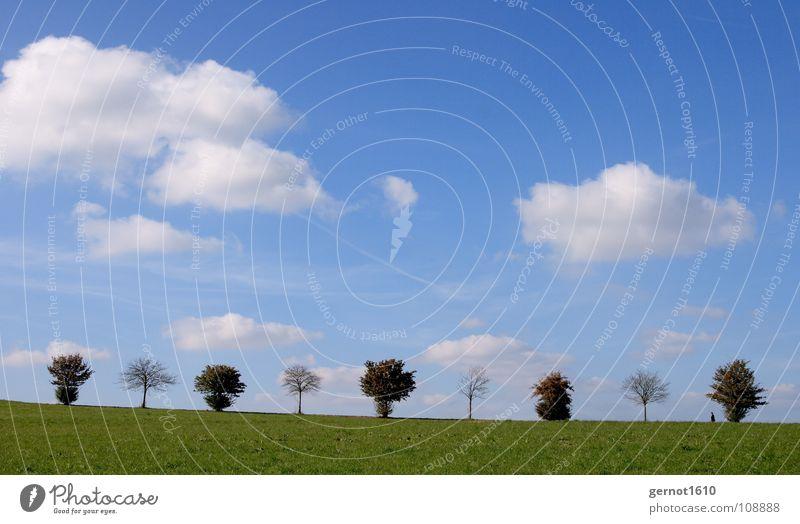 1-0-1-0-1-0-1-0-1 digitale Bäume Horizont Baum Baumreihe Reihe Herbst Herbstlaub ruhig weiß grün Idylle wandern Spaziergang Spazierweg Allee Sommertag