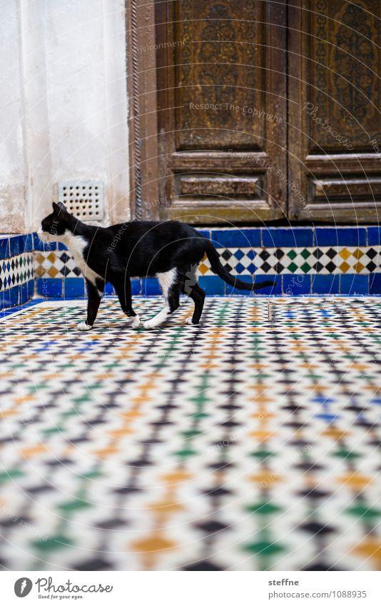 Tierisch gut: Katze Tür Haustier 1 exotisch Naher und Mittlerer Osten Marokko Fliesen u. Kacheln schwarzer kater Hauskatze Farbfoto mehrfarbig Außenaufnahme
