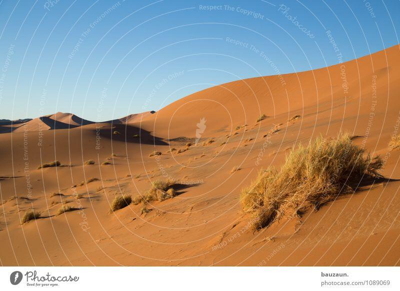 nochmal. Ferien & Urlaub & Reisen Tourismus Abenteuer Ferne Freiheit Sightseeing Umwelt Natur Landschaft Urelemente Erde Sand Himmel Wolkenloser Himmel Sonne