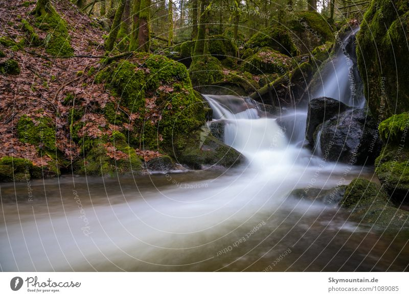 Gertelbach-Wasserfall Schwarzwald Natur schön Wasser Sommer Baum Erholung Landschaft Winter Umwelt Berge u. Gebirge Leben Herbst Frühling Sport Gesundheit Felsen