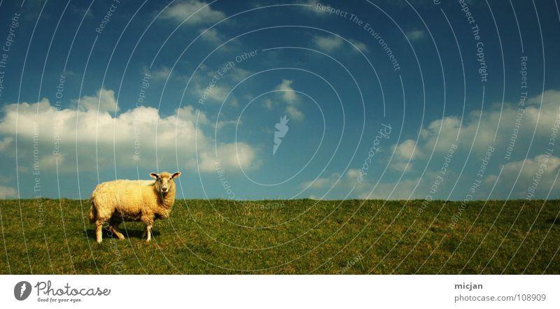 mäh! Himmel blau grün Farbe Einsamkeit Wolken Tier gelb Graffiti Wiese Gras Gesundheit Mauer Beine Stimmung Horizont