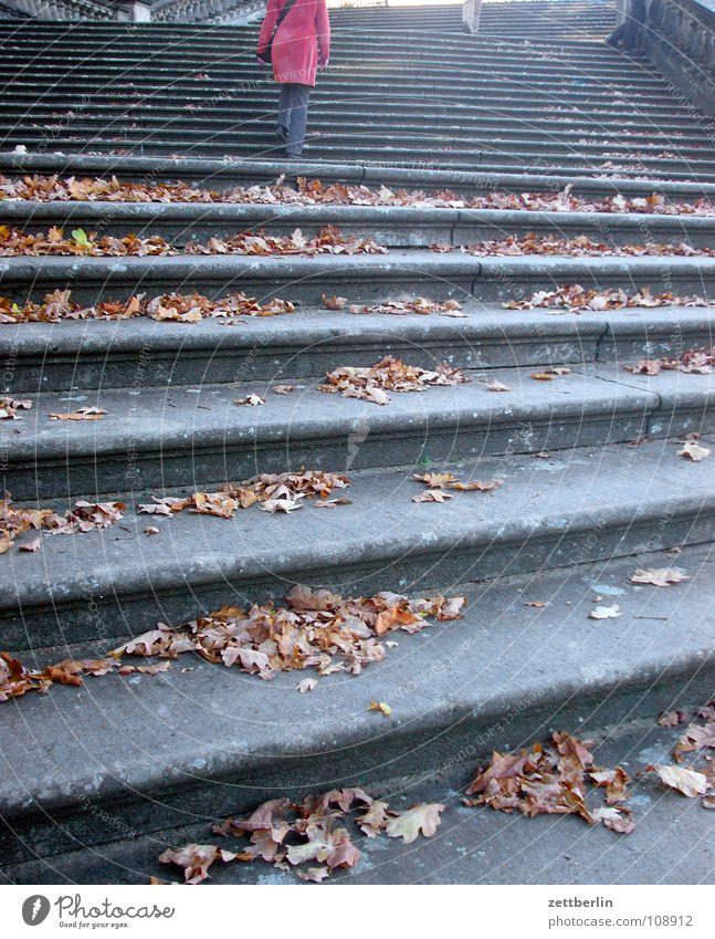 Herbst Frau Mensch Blatt Herbst Architektur Treppe aufwärts steigen Karriere abwärts aufsteigen Lebenslauf Abstieg Potsdam Freitreppe