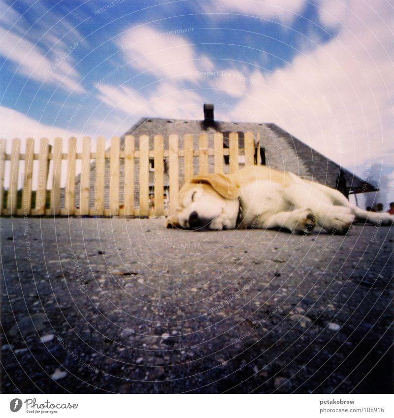 LochbildSchw01 Tier Hund Zaun Schwarzwald Feldberg Schwarzwaldhaus