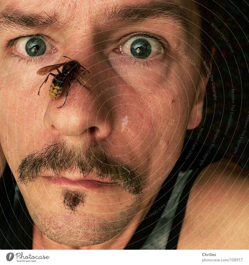 Myself 1 Ironie 100 Hornissen Panik Stress Selbstportrait Hautflügler schwarz gelb Nordwalde Angst Mann Chrises Gesicht Nase Auge lachhaft Augen zu und durch