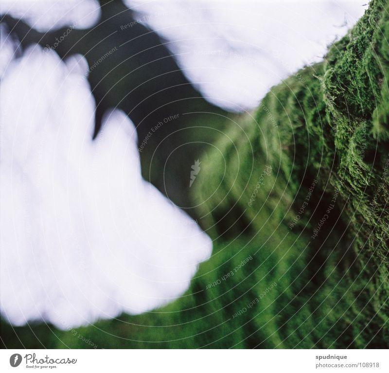 unrasiert Natur alt grün Baum Herbst Nebel frisch Ast bewachsen