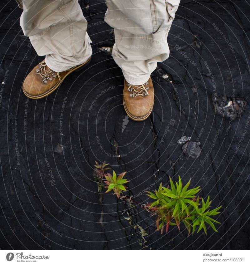 [SAFARI] - PLATTFUSS Pflanze entdecken Stiefel Botanik Expedition Safari Hosenbeine Botaniker Vor dunklem Hintergrund