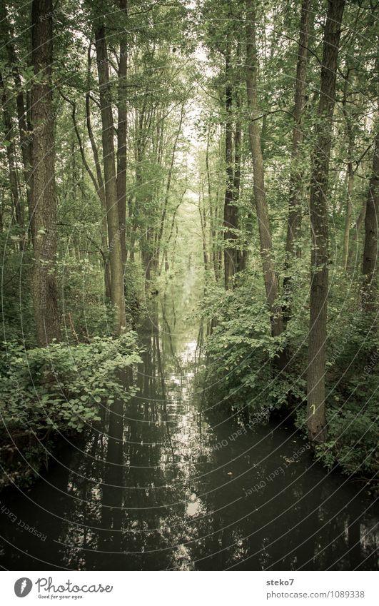 Land der Gurken Wald Fluss grün Natur Symmetrie Spreewald Kanal Gedeckte Farben Außenaufnahme Menschenleer