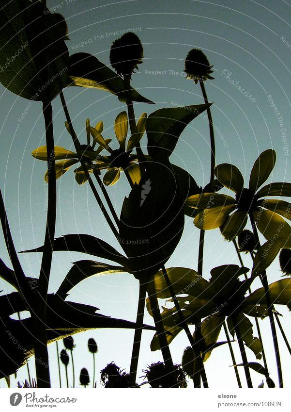 ::UND DIE TAGE WERDEN KÜRZER:: Natur Himmel Blume Pflanze Blatt gelb Herbst Blüte Stengel