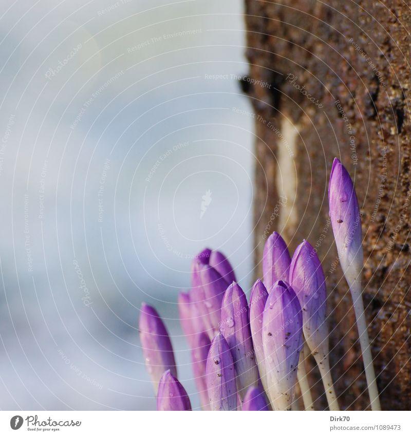 Noch mehr Frühling .... blau Pflanze weiß Baum Blume Blüte Garten braun Park Wachstum dreckig elegant frisch Klima Beginn