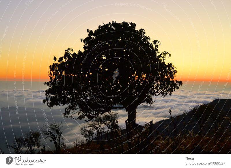 Himmel Natur Ferien & Urlaub & Reisen Sommer Sonne Baum Einsamkeit rot Blume Blatt Landschaft Wolken Wald Herbst Wiese Gras