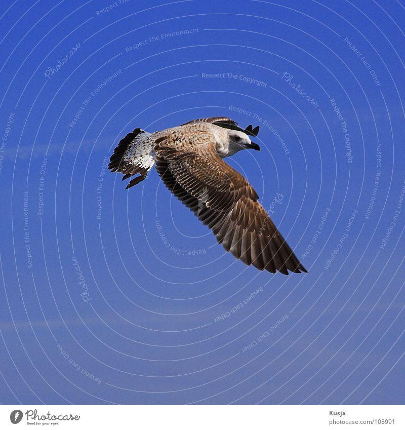 www.billigflieger.de Himmel blau weiß braun Vogel fliegen laufen Luftverkehr Flügel Suche Feder Jagd Segeln Greifvogel Möwe Schweben