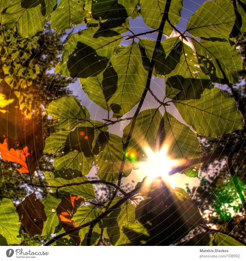 WALDLICHT Wald Baum Blatt Gegenlicht Licht blenden Herbst Frühling schick schön Waldlichtung Märchen Märchenwald Blende Blendeneffekt Schatten Biologie HDR