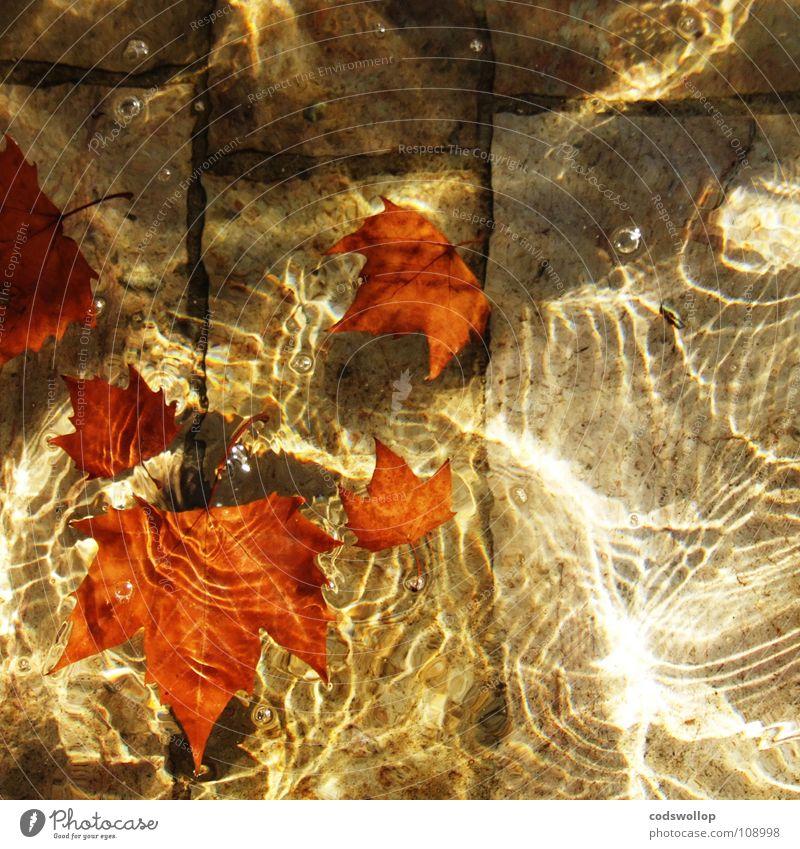 autumn abglanz Natur Wasser schön rot Blatt Herbst orange glänzend Schwimmbad Brunnen Lichtspiel Wasserfontäne Bronze Sandstein Platane