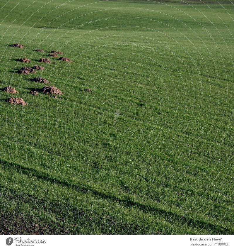 Pickel[2] Maulwurf Hügel Golfplatz gepflegt Plage grün unterirdisch Desaster Schade Ärger töten blind Wiese Makel Fehler Halm Vergänglichkeit befleckt