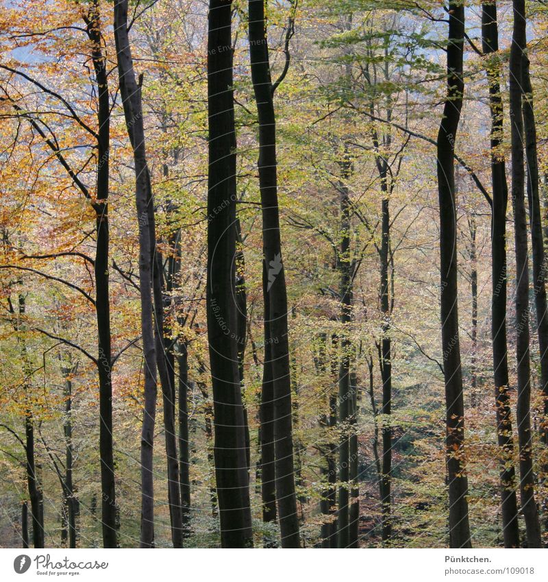 1001 Blatt Wald Laubbaum Farbenspiel mehrfarbig Herbst Holz Herbstwald Rohstoffe & Kraftstoffe Baumrinde grün braun rot gelb Jahreszeiten Oktober wandern kalt