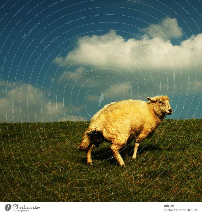 Nr. 5 Himmel blau grün Farbe Einsamkeit Wolken Tier gelb Wiese Gras Beine Stimmung gehen Horizont Angst laufen