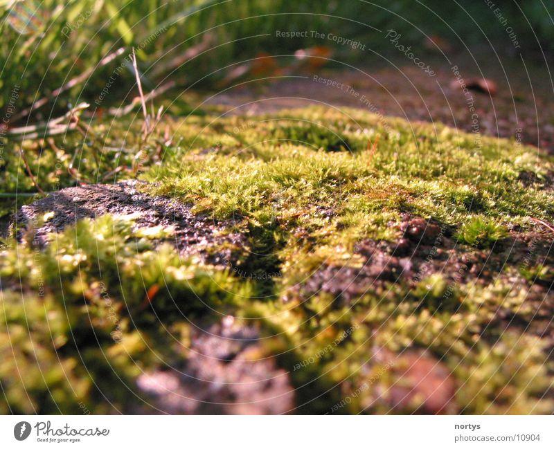 Ohne Moos... Natur grün Wiese Gras Moos