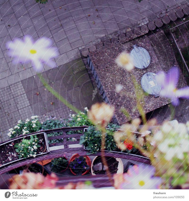 blümchenmauer blau Sommer Blume oben grau Asphalt Balkon tief Kopfsteinpflaster verblüht