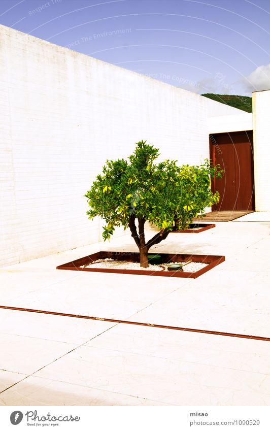 Zitronenbaum im Garten Natur nur Himmel Sonne Schönes Wetter Baum Sträucher Madinat al-Zahra Andalusien Haus Mauer Wand Tür Sehenswürdigkeit Beton Stahl alt