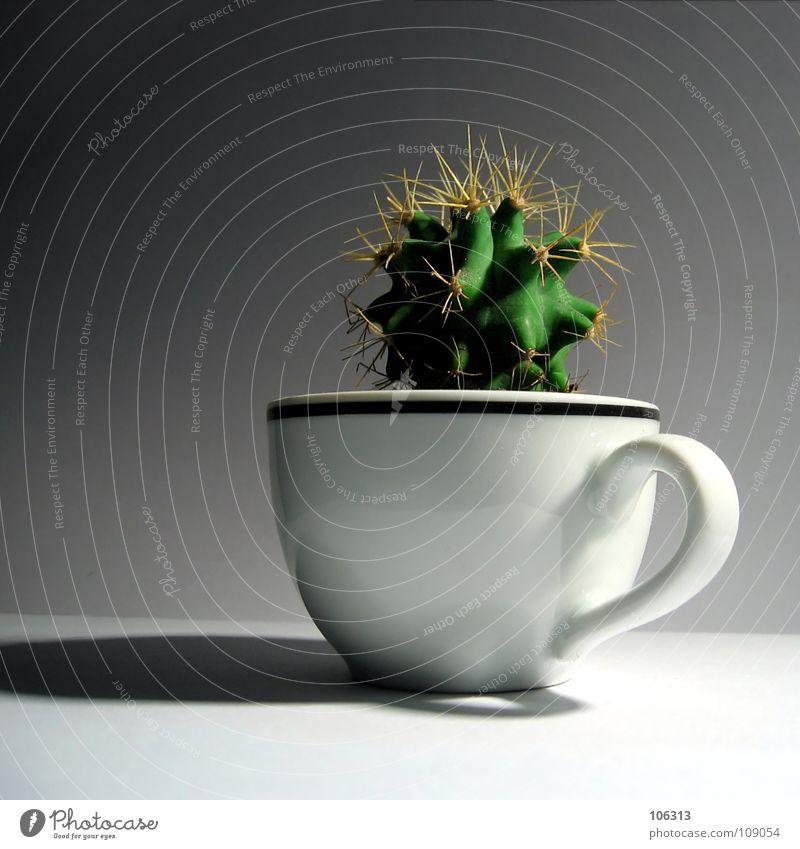 A CUP OF MESKALIN Kaktus Tasse grün stachelig klein Pflanze süß weiß Keramik Ernährung Tragegriff Wachstum Rauschmittel außergewöhnlich extravagant schick
