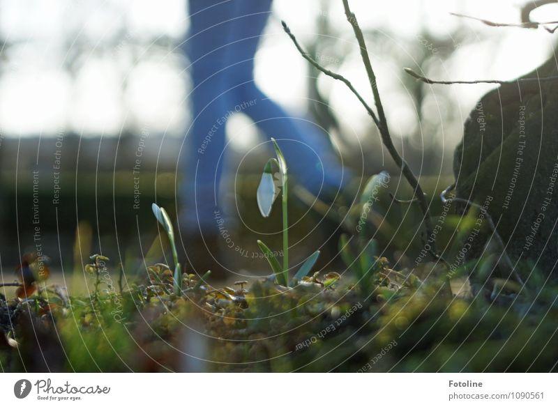 Vorbei gelaufen! Umwelt Natur Landschaft Pflanze Frühling Blume Blüte Garten Park hell nah natürlich blau grün weiß Schneeglöckchen Frühlingsgefühle