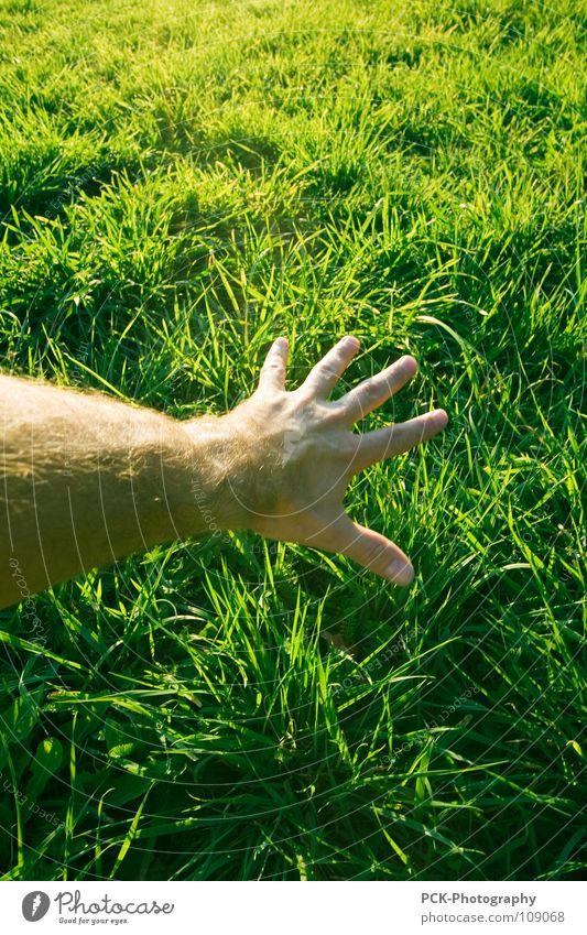 die gras streichel hand Hand grün Pflanze Gefühle Gras Haare & Frisuren Haut Arme Finger berühren Verkehrswege Halm Botanik Erreichen Körperteile Grünfläche