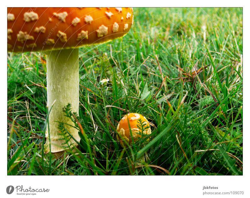 ..T..o.. grün weiß gelb Wiese Herbst Gras grau klein Garten orange Feld Lebensmittel groß Ernährung rund Punkt