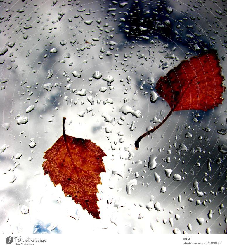 Herbstwetter Himmel Blatt Wolken Regen Wetter Wassertropfen nass Vergänglichkeit Gewitter Herbstlaub schlechtes Wetter