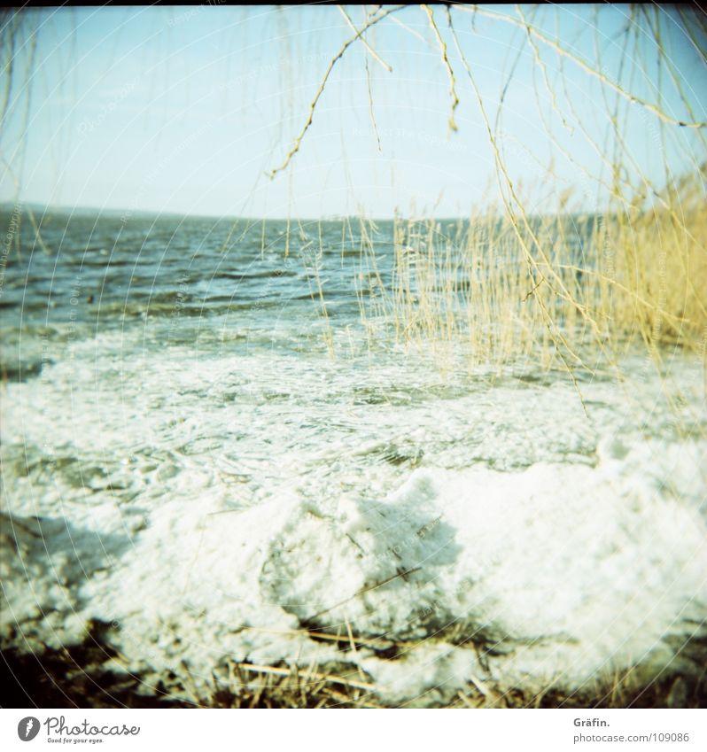 Eisgang kalt Winter Baum Schilfrohr Meer Horizont Wellen Eiskristall erfrieren gefroren Binnensee Holga Einsamkeit ruhig Geplätscher Eiswürfel Eisscholle Idylle